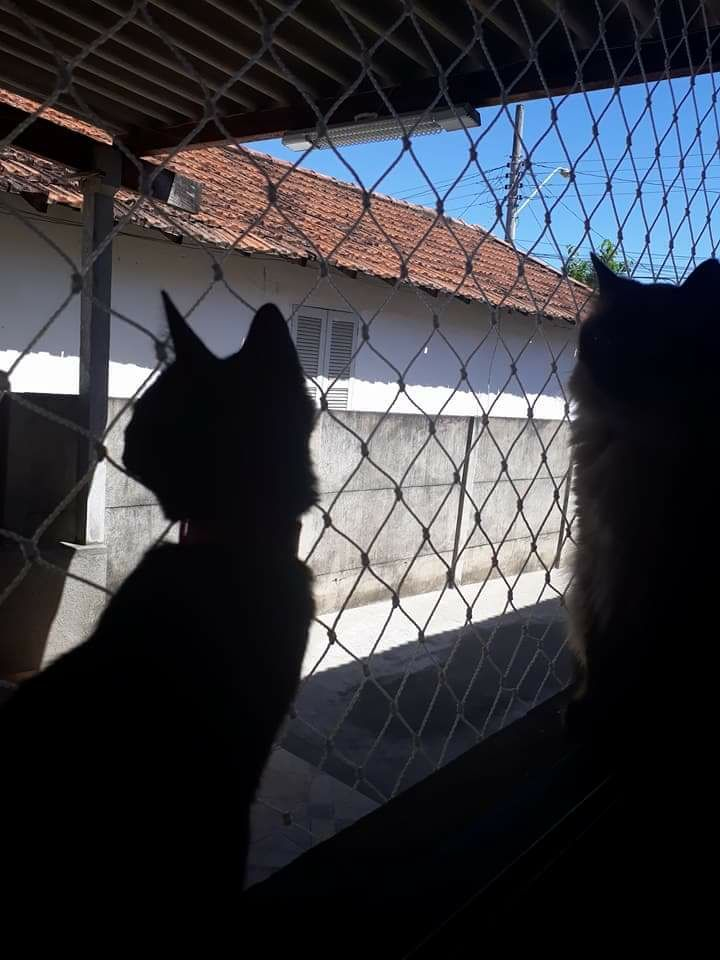 Rede de proteção instalada para evitar a queda de gatos