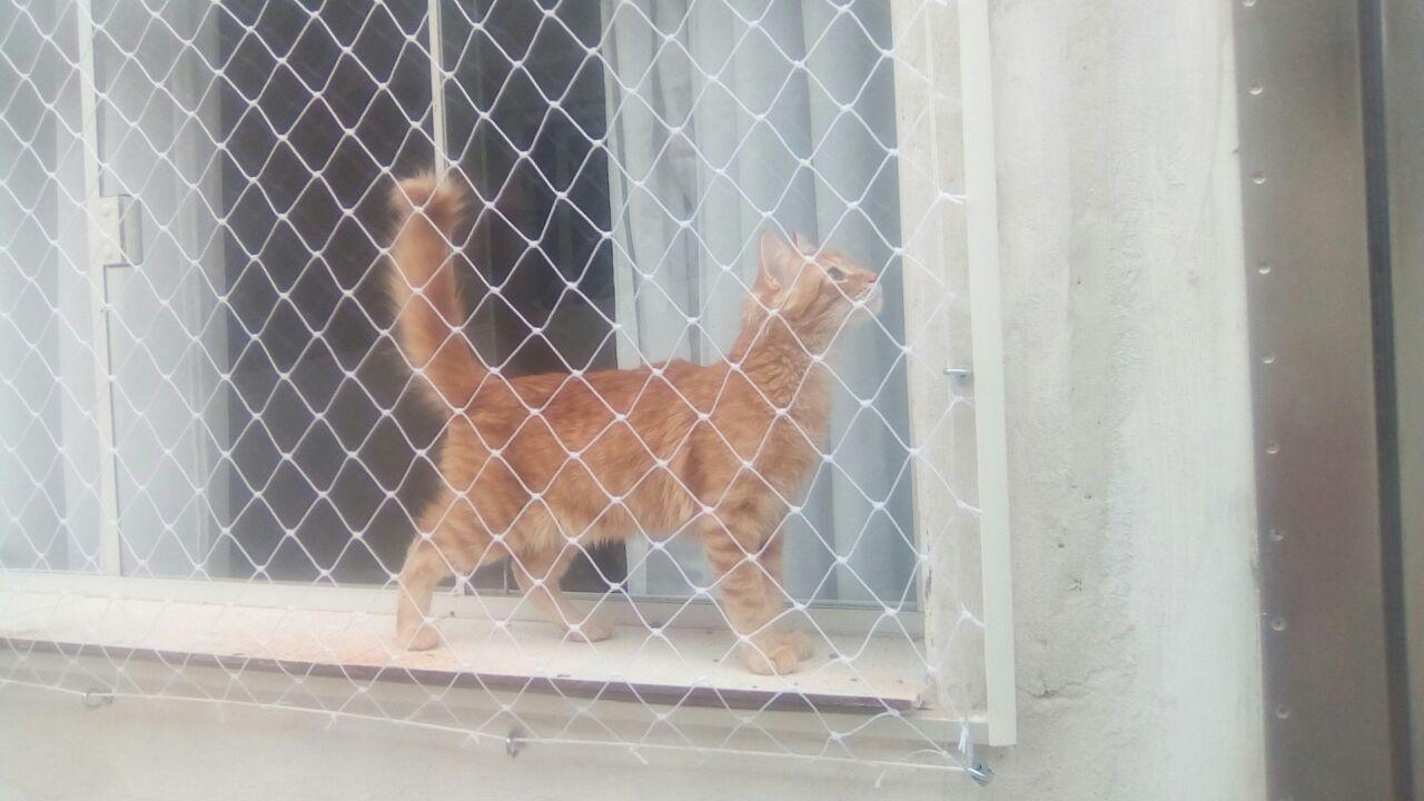 rede de proteção para gatos curitiba bairro uberaba